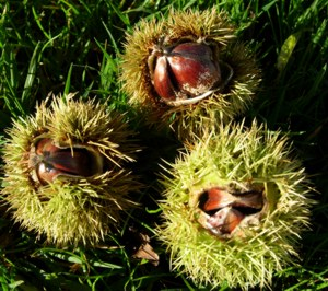 Sweet Chestnut bach flower can help when anguish seems unbearable