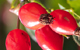 rosehip herbal remedy